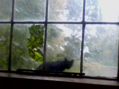 black cat outside broken window