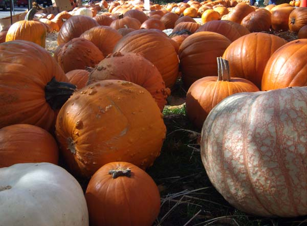 selection of pumpkins