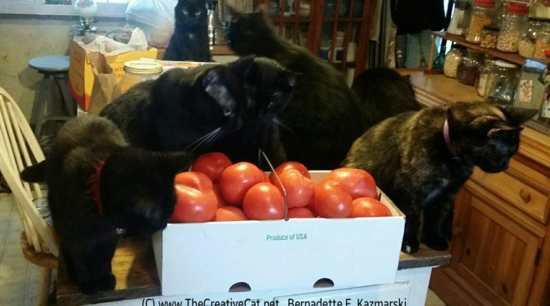 Tomatoes and cats