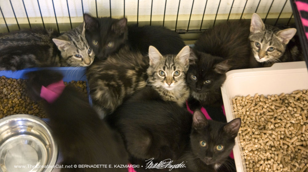 Seven kittens rescued from hoarding.