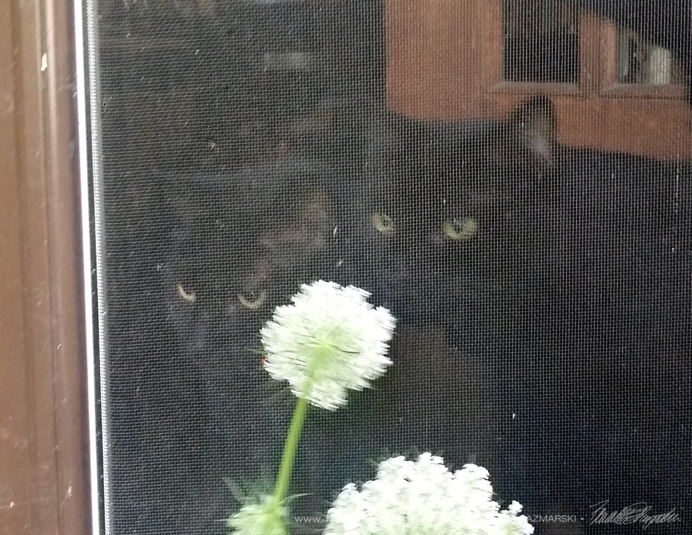 Mimi and Mr. Sunshine study my flowers.