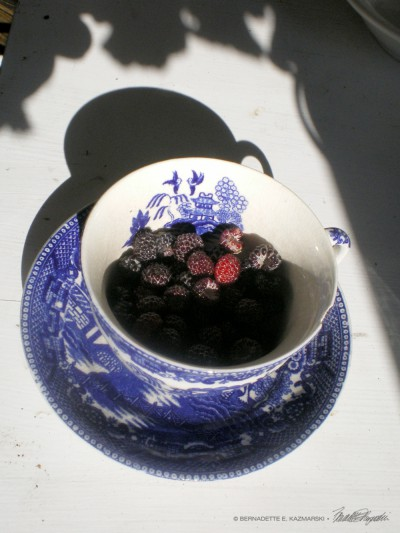 An antique teacup of raspberries from my back yard which Namir and Cookie supervised me harvesting.