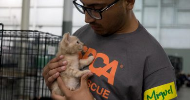 ASPCA Continues to Help Hundreds of Animals Displaced by Hurricane Irma through Field Rescue, Relocation & Emergency Sheltering