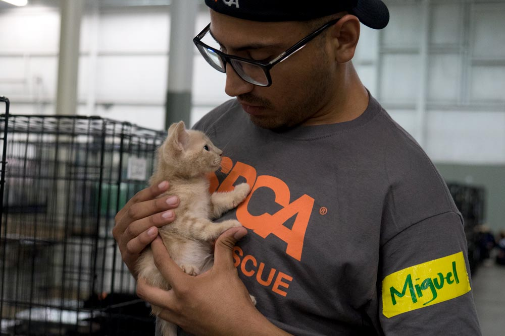ASPCA volunteer comforts a kitten in the ASPCA Duncan, SC emergency shelter. (Copyright ASPCA)