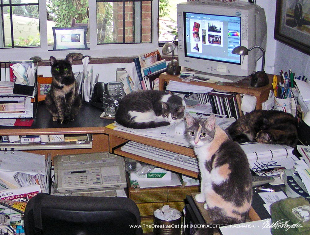 Kelly, Namir, Cookie and Peaches wait for me on my desk, July 21.