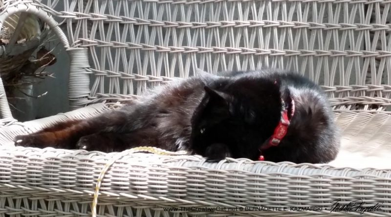 Mimi plans to relax on her wicker settee.