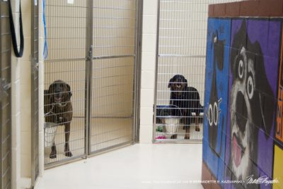 Large dogs in large cage areas.