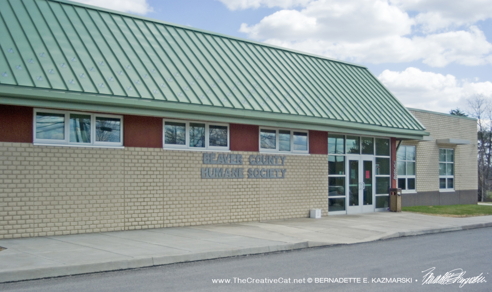 `The Beaver County Humane Society