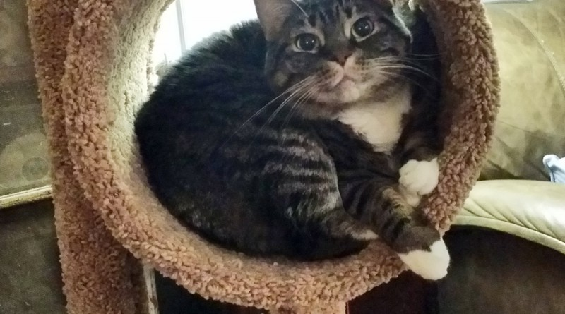 Baby in her spot on the cat tree.