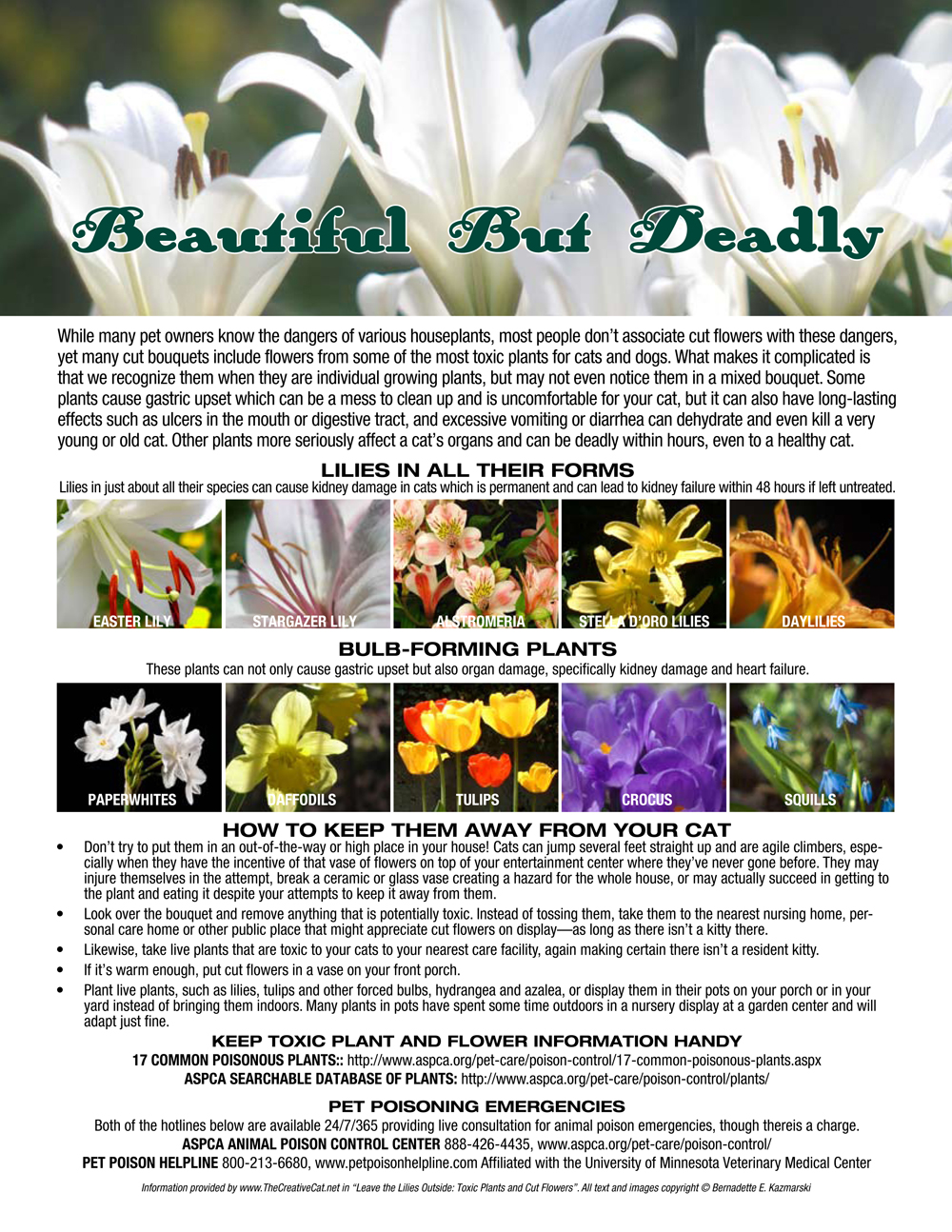 Leave the lilies outside toxic plants and cut flowers the guide to common plants toxic to pets izmirmasajfo Choice Image