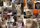 The Brookline Cats: the Final Resolution