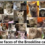 Brookline cats collage by Tanya Veverka.