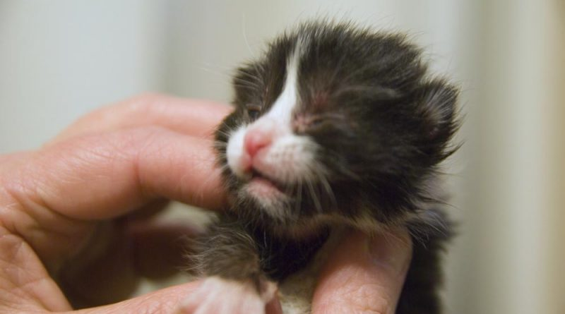 The other tux kitten, just for comparison.