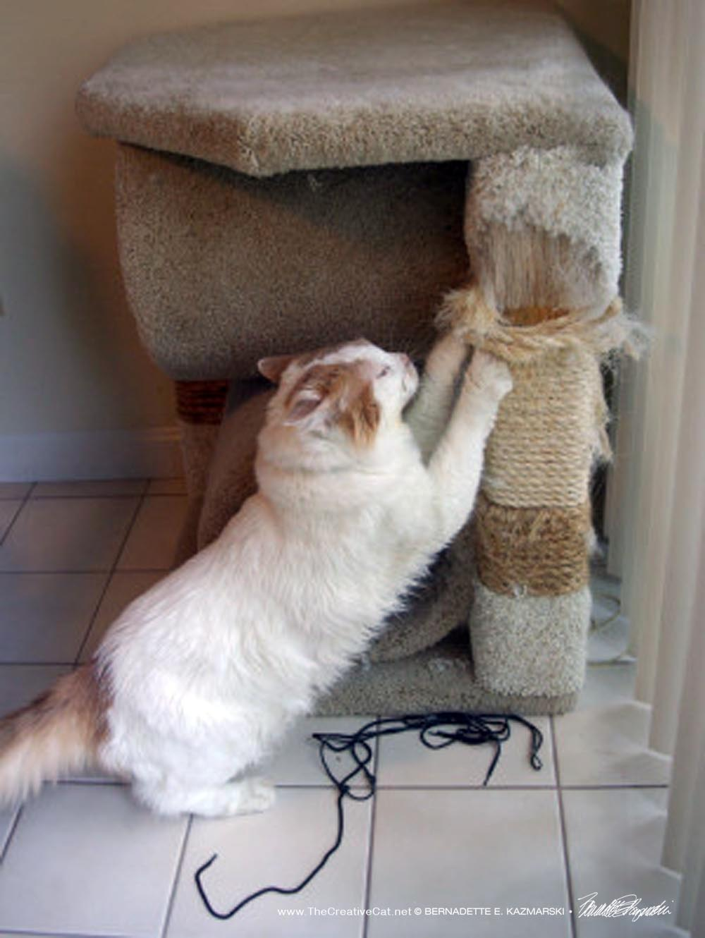 Scruffy and his scratching post by the door.