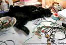 Marketplace: More Cat Cabochon Pendants, and a Special Discount