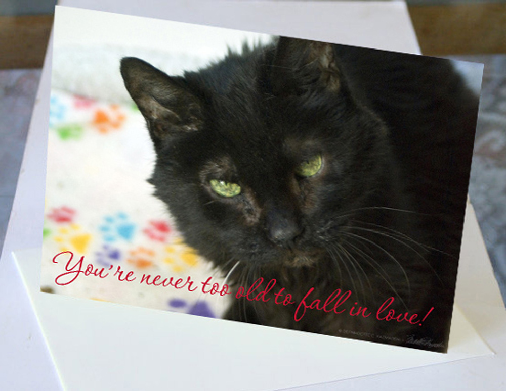 card with senior black cat