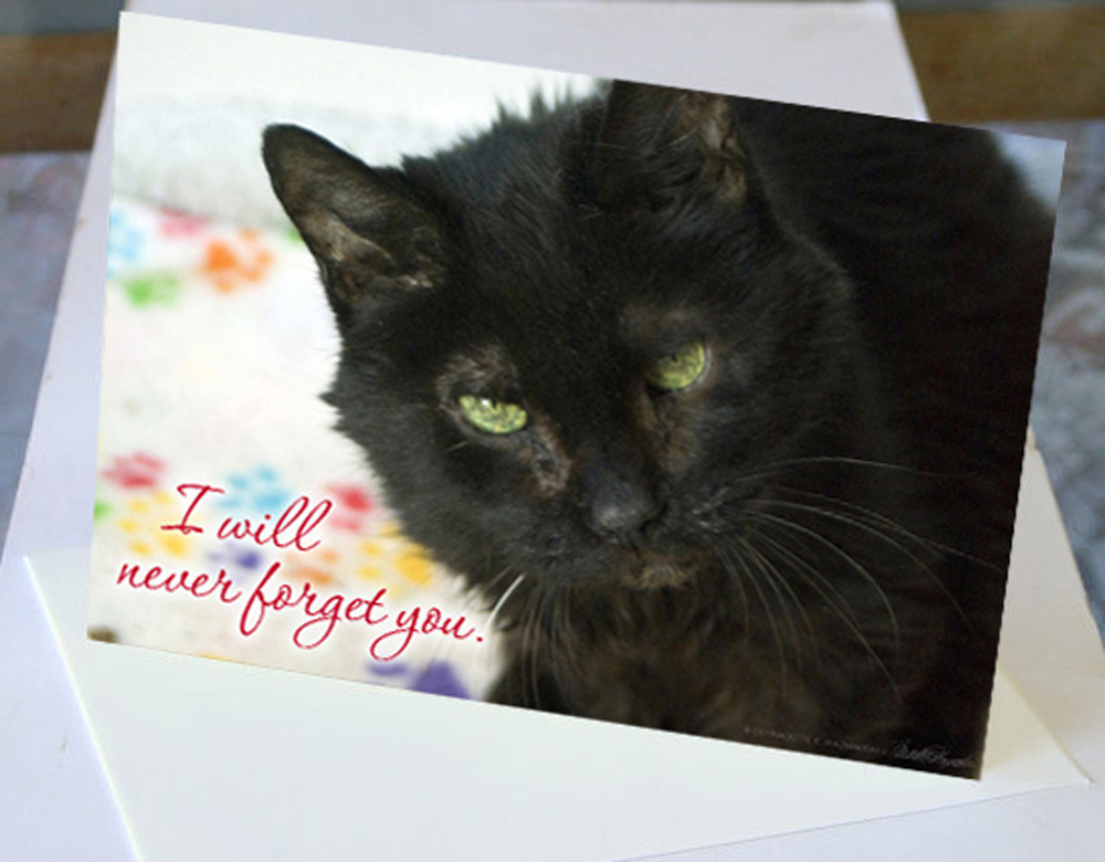 cards sympathy emeraude sample the creative cat