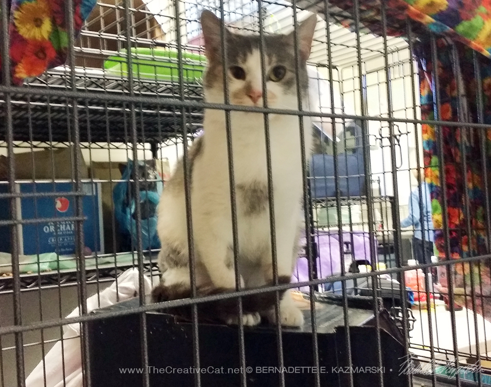 Carly in her cage at the clinic.