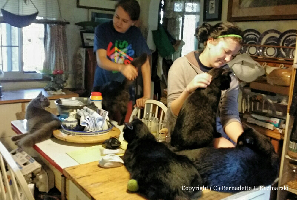 Seven cats in the kitchen.