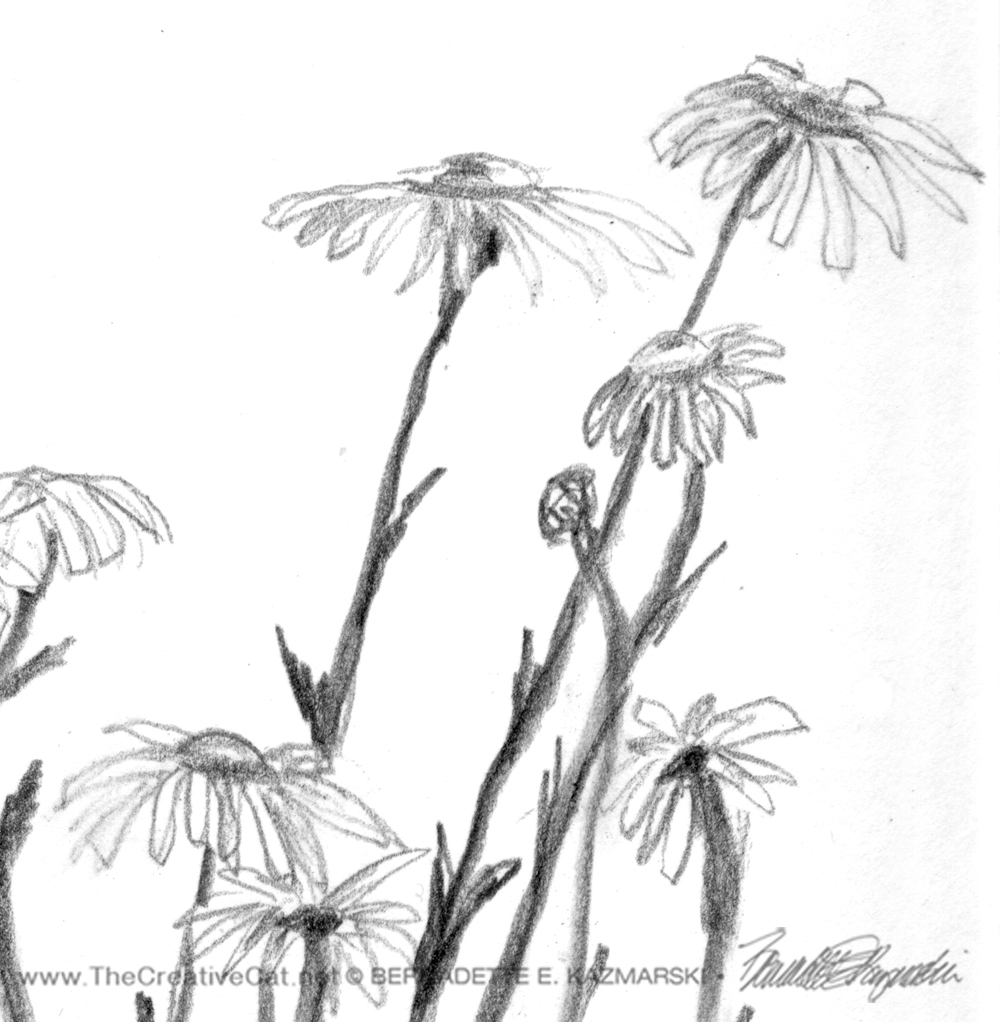 Detail of daisies.