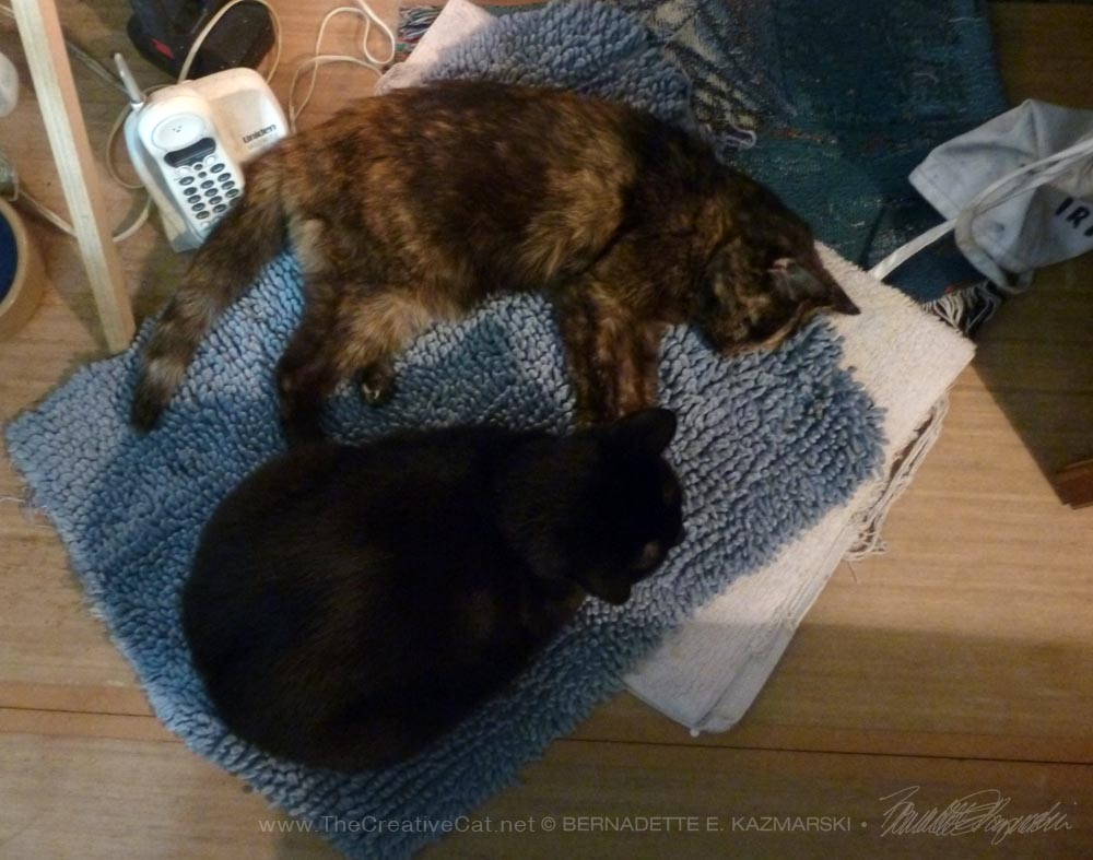 Bean settled with Cookie for her last hours and never left her, or stopped purring.