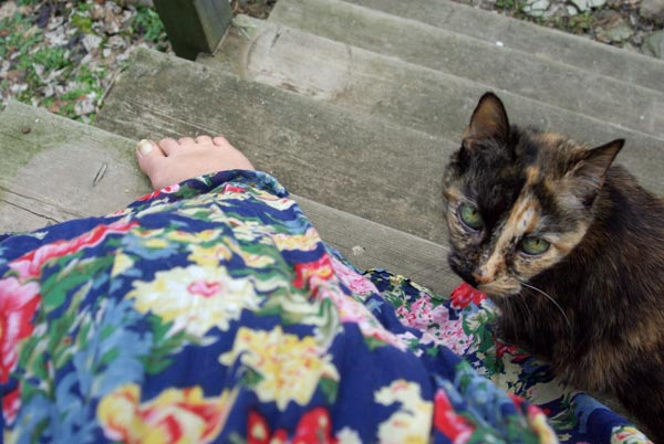 tortie cat and flowered dress