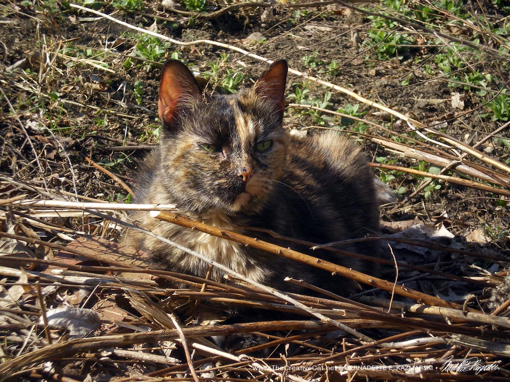 I know Cookie was purring and pleased with herself on her brush pile.