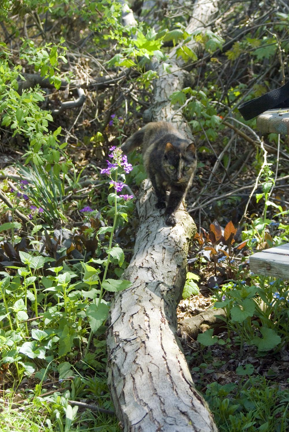 tortoiseshell cat on fallen branch