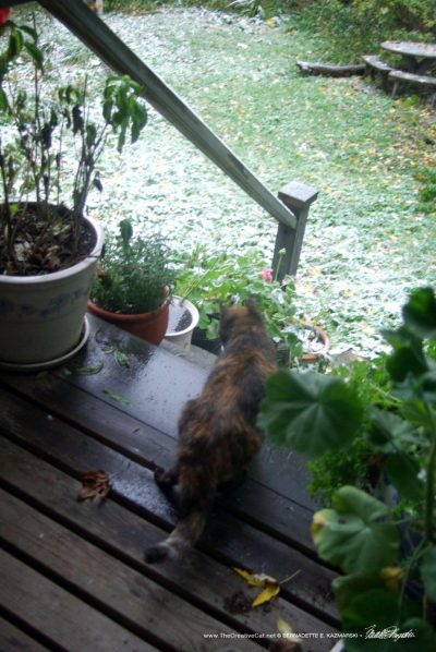 Cookie greets a snowy morning.