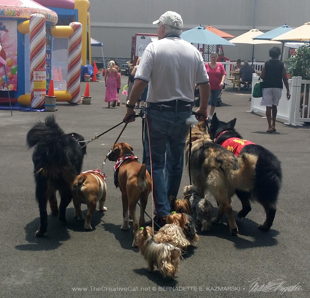 Dogs with dog trainer.