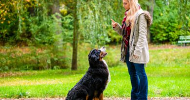 Press Release: Dos and Don'ts for a Well-Behaved Pet