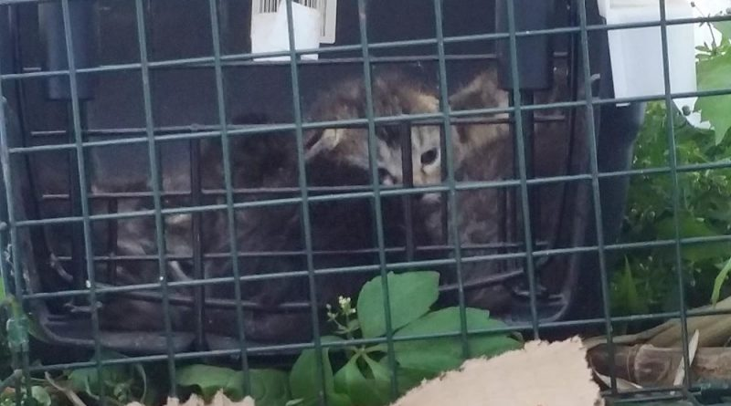 Kittens in the carrier looking for mom.