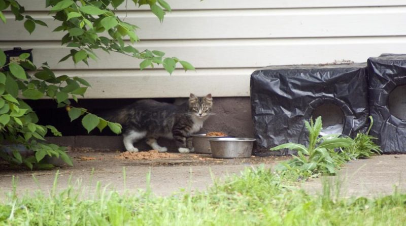 A young tabby and white cat.