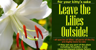 And Don't Forget: Leave the Lilies Outside!