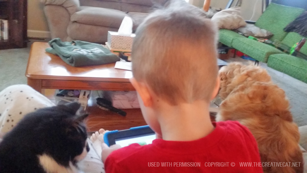 child with cat and dog