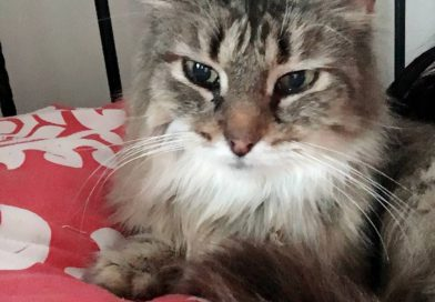 Cats for Adoption: FIV+ Cats Ready to Go Home