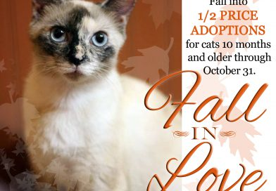 Cats for Adoption: Half Off Adult Cat Adoptions With Pittsburgh C.A.T.