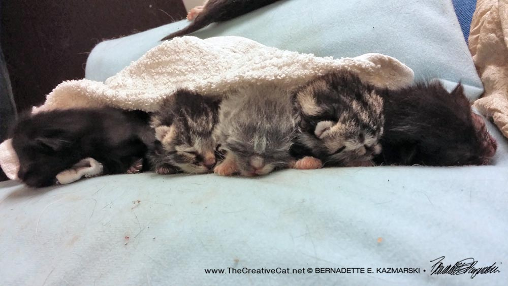 Five revived kittens.