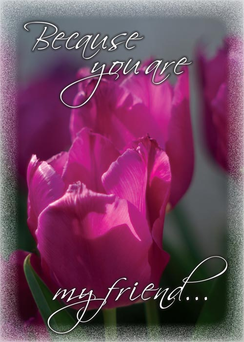 greeting card with two pink tulips