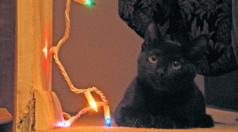 "Fromage says, ""Lights? What lights? I don't know how they got that way."""