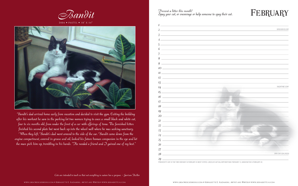 cat portrait, story and calendar page