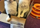 Nature's Variety Instinct Raw Boost Minis for Cats reviewed for #Chewycom