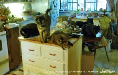 Five cats are totally aghast, well, sort of.