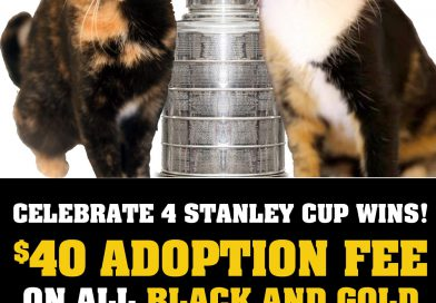 Cats for Adoption: Stanley Cup Special!