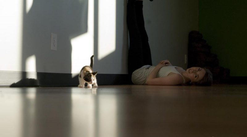 Daily Photos: Yoga with Kittens!