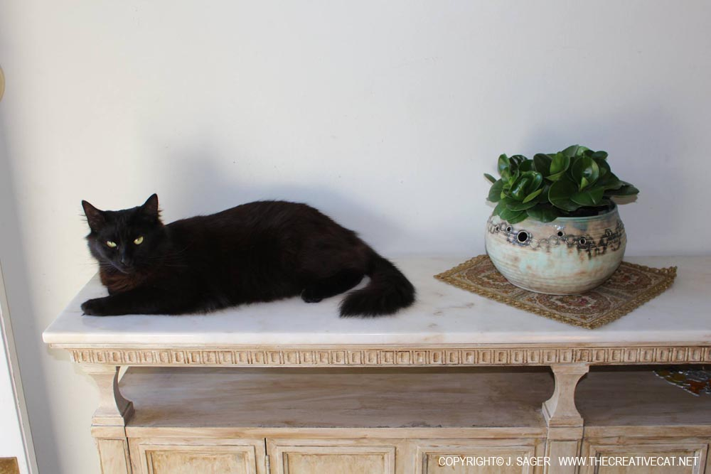 Simon looking decorative on the cool marble top.