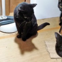 black cat with cataracted eye