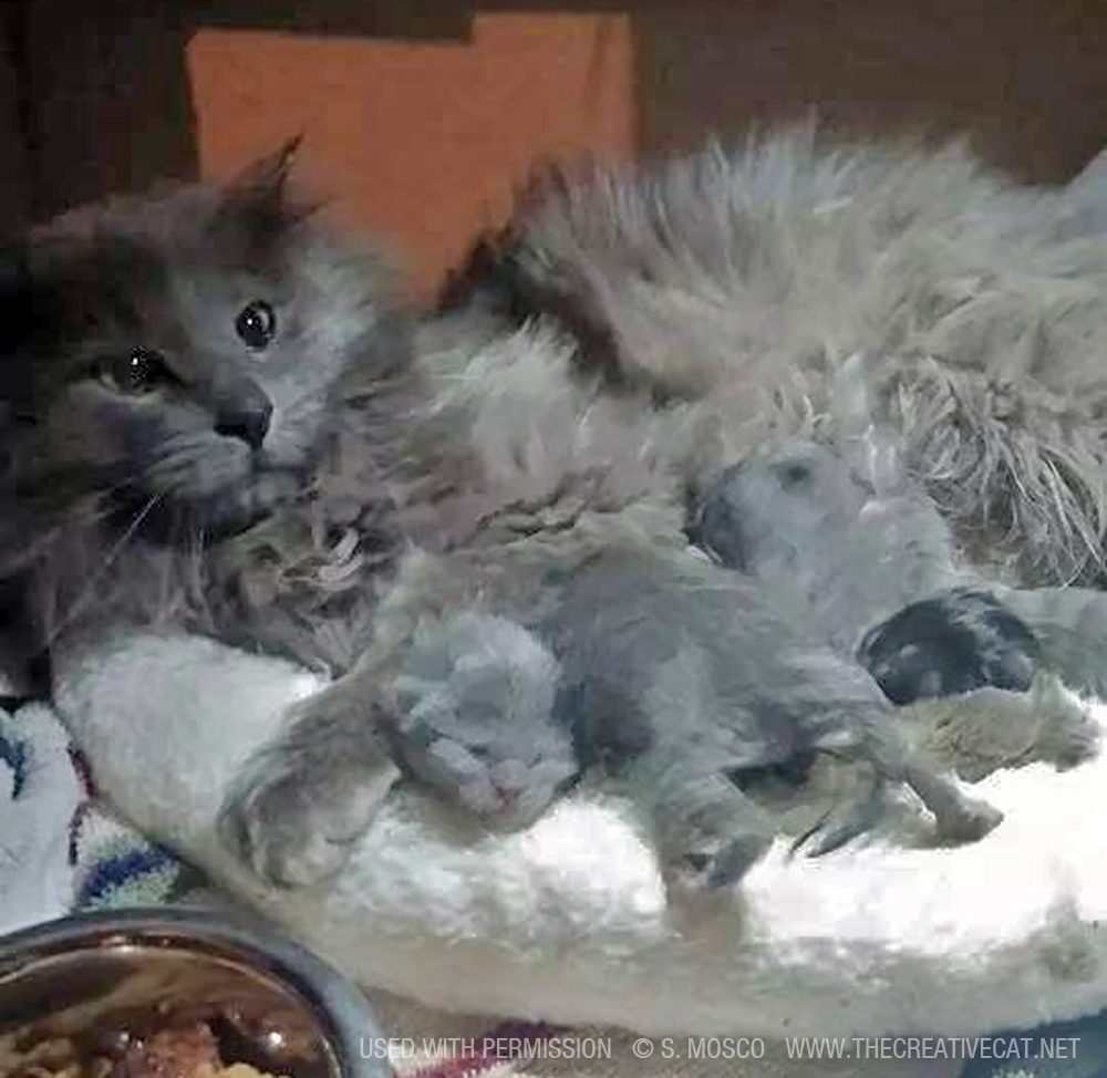 Mama kitty reunited with her kittens.