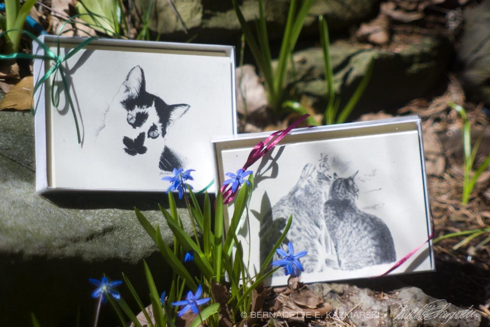 sets of cat note cards