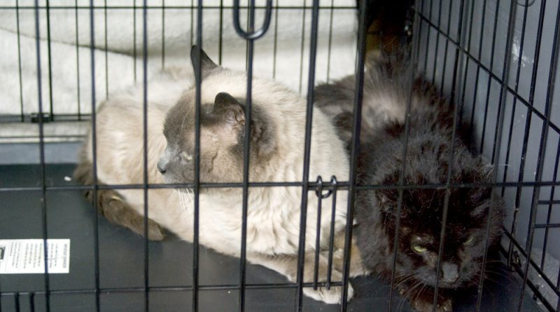 Lakota and Jojo in the cage in the back of my car.
